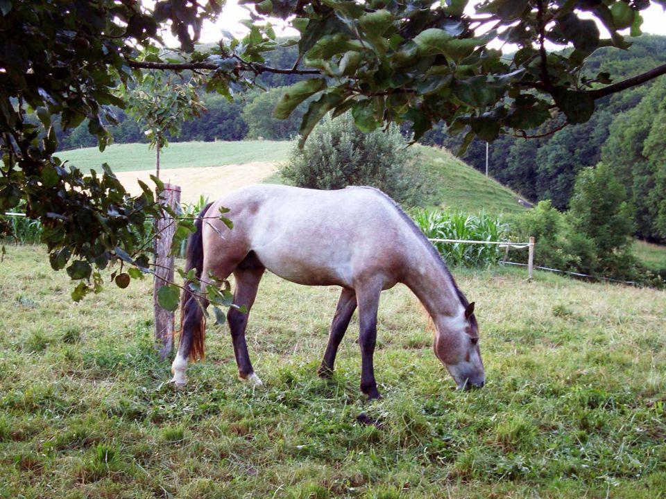 Die Augen sind der Spiegel der Seele eines Pferdes, das Fell, der Spiegel der Gesundheit!