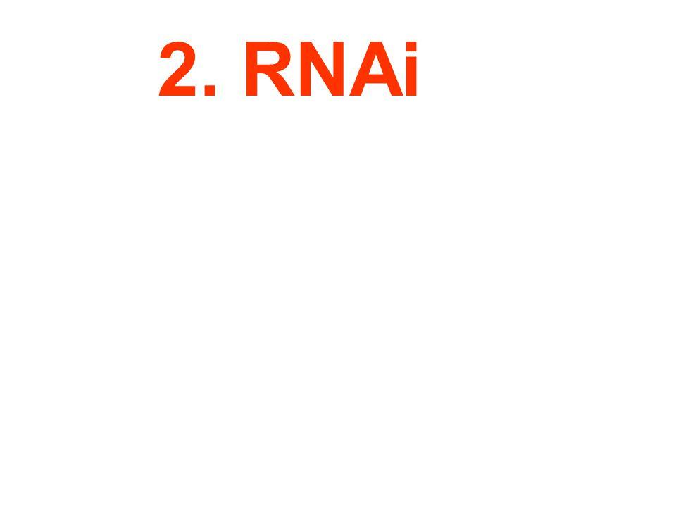 2. RNAi