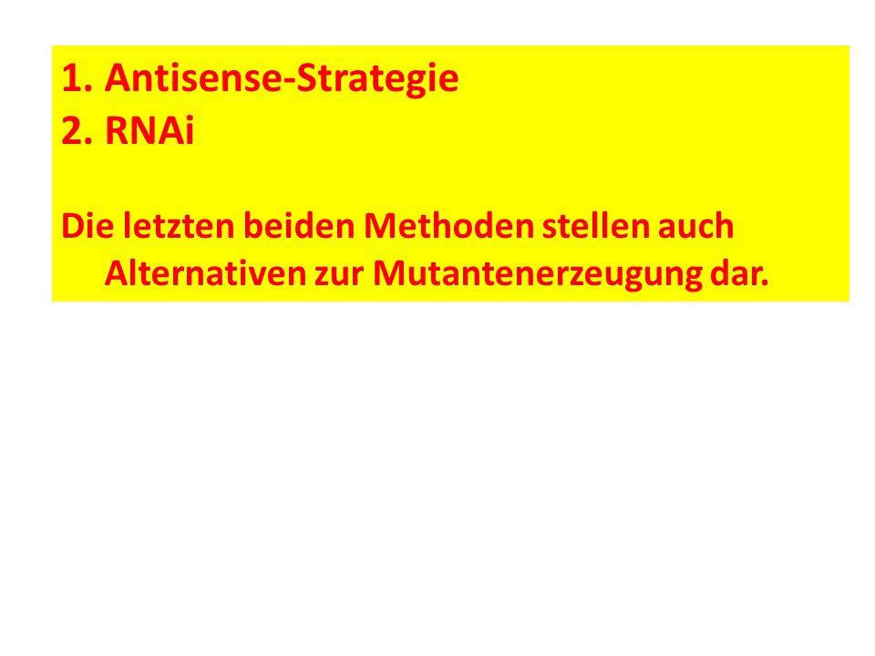 1.Antisense-Strategie 2.