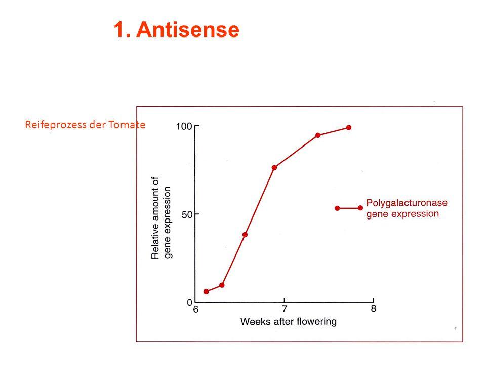 1. Antisense