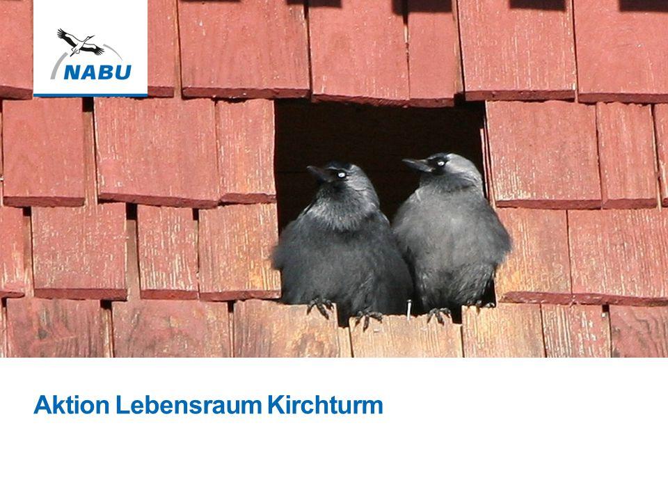 PowerPoint Präsentation Lebensraum Kirchturm Bitte beachten Sie folgende Hinweise: Der Naturschutzbund Deutschland e.V.