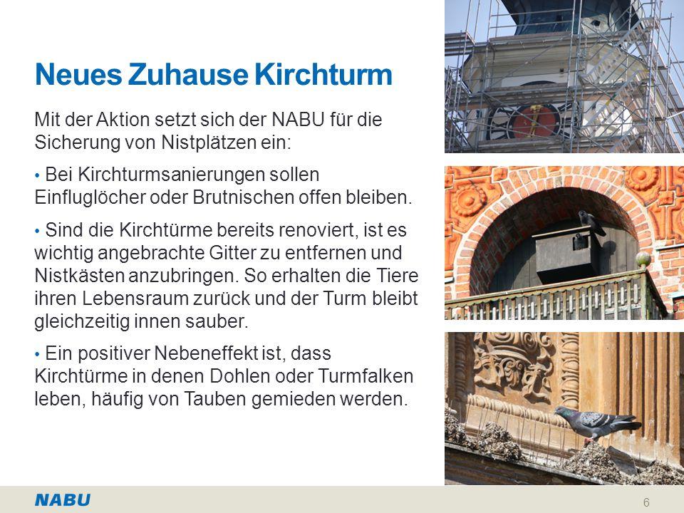 Neues Zuhause Kirchturm Mit der Aktion setzt sich der NABU für die Sicherung von Nistplätzen ein: Bei Kirchturmsanierungen sollen Einfluglöcher oder Brutnischen offen bleiben.