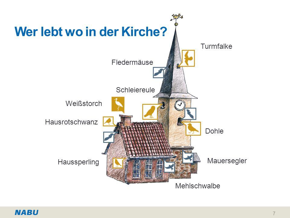 Materialien und Ansprechpartner Die Materialien können bequem bestellt werden unter www.NABU.de/shop Weitere Informationen zur Aktion erhalten Sie unter www.lebensraum-kirchturm.de Ihren persönlichen Ansprechpartner der NABU-Gruppe vor Ort finden Sie unter www.NABU.de/adressen.