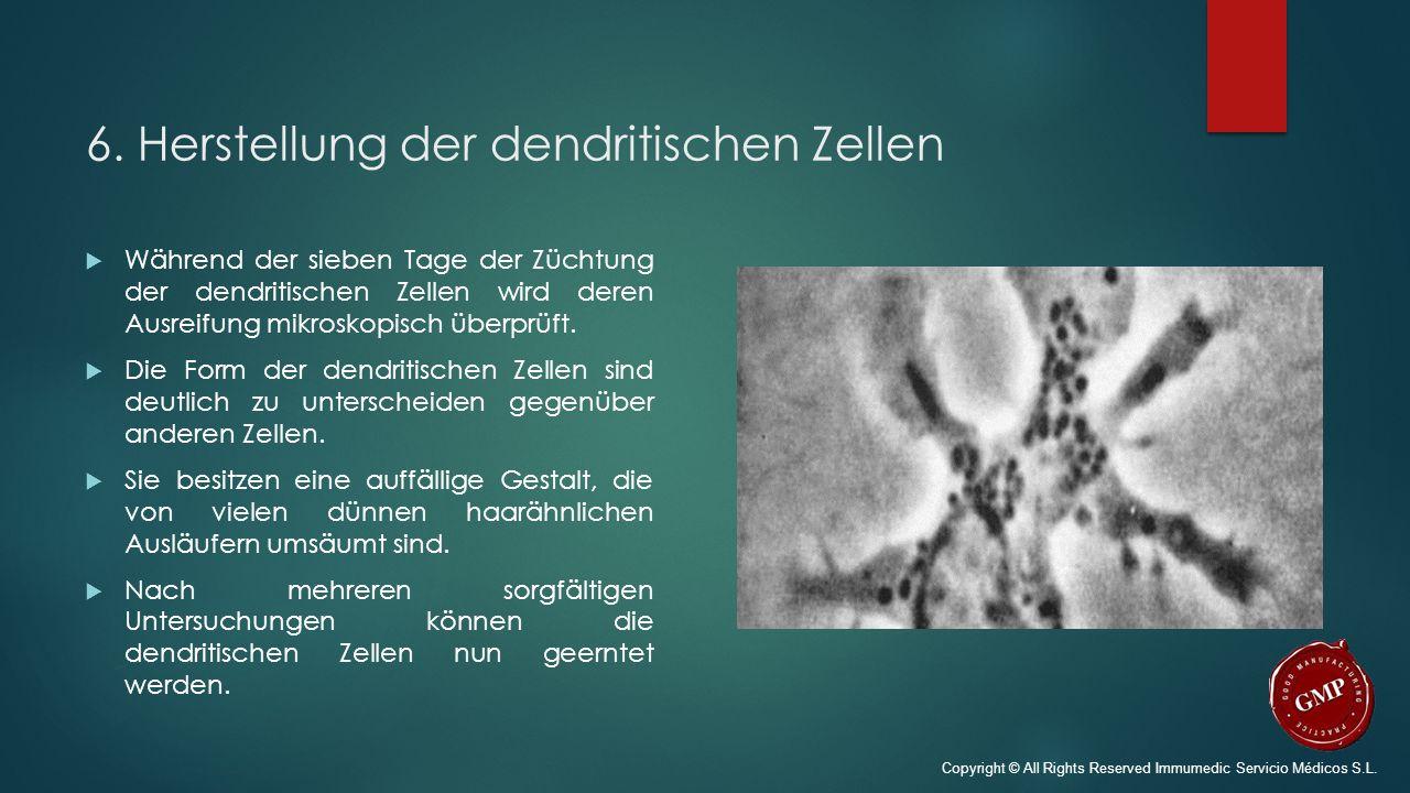 6. Herstellung der dendritischen Zellen  Während der sieben Tage der Züchtung der dendritischen Zellen wird deren Ausreifung mikroskopisch überprüft.