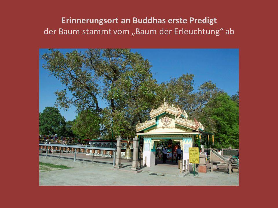 """Erinnerungsort an Buddhas erste Predigt der Baum stammt vom """"Baum der Erleuchtung ab"""