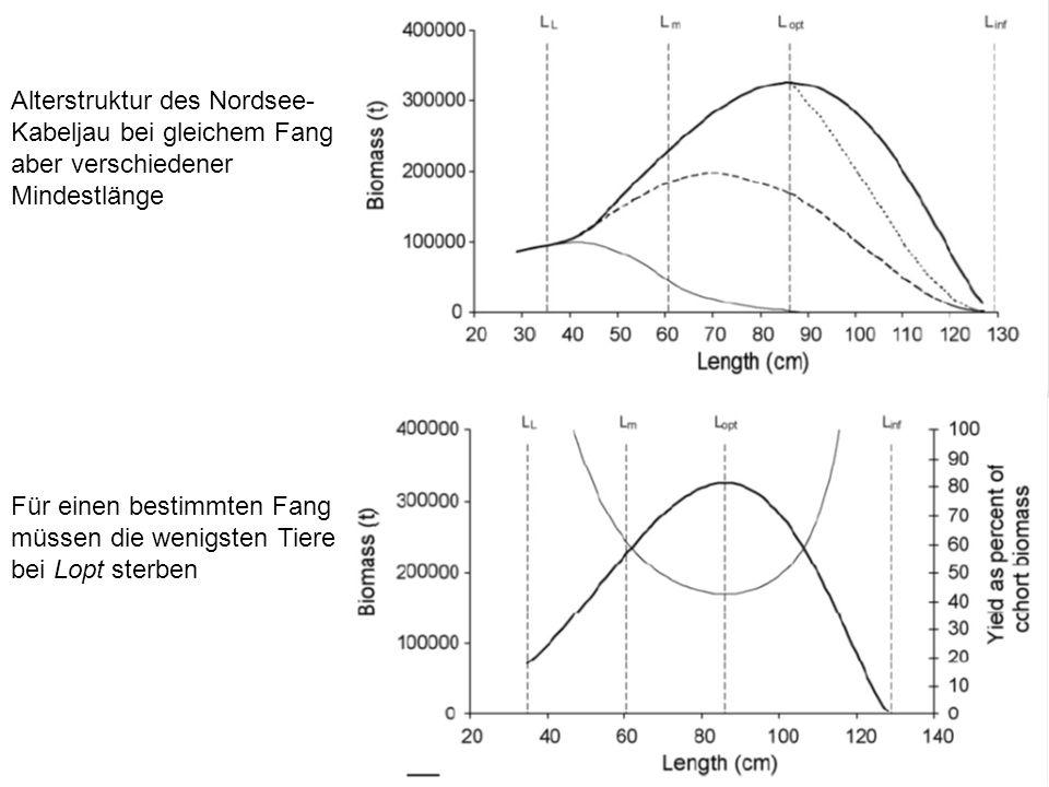 Alterstruktur des Nordsee- Kabeljau bei gleichem Fang aber verschiedener Mindestlänge Für einen bestimmten Fang müssen die wenigsten Tiere bei Lopt sterben