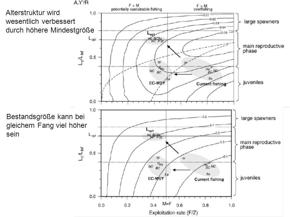 Alterstruktur wird wesentlich verbessert durch höhere Mindestgröße Bestandsgröße kann bei gleichem Fang viel höher sein