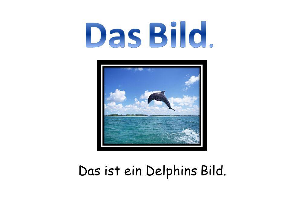 Das ist ein Delphins Bild.