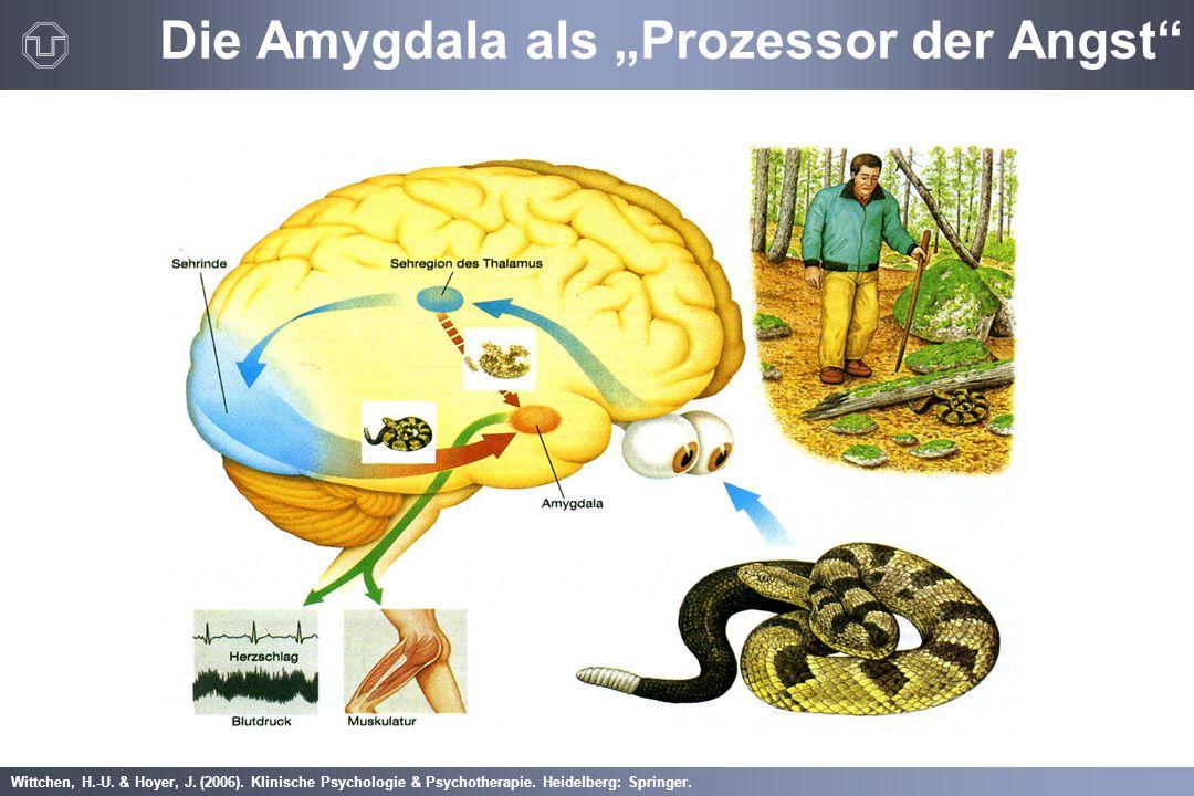 """Wittchen, H.-U. & Hoyer, J. (2006). Klinische Psychologie & Psychotherapie. Heidelberg: Springer. Die Amygdala als """"Prozessor der Angst"""""""