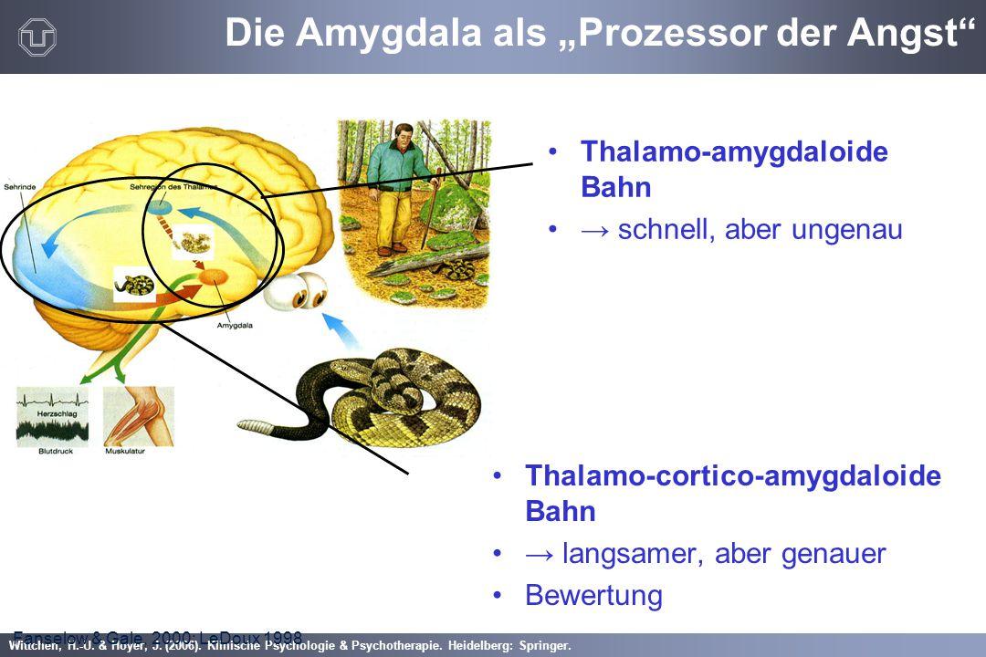 """Wittchen, H.-U. & Hoyer, J. (2006). Klinische Psychologie & Psychotherapie. Heidelberg: Springer. Die Amygdala als """"Prozessor der Angst"""" Thalamo-corti"""