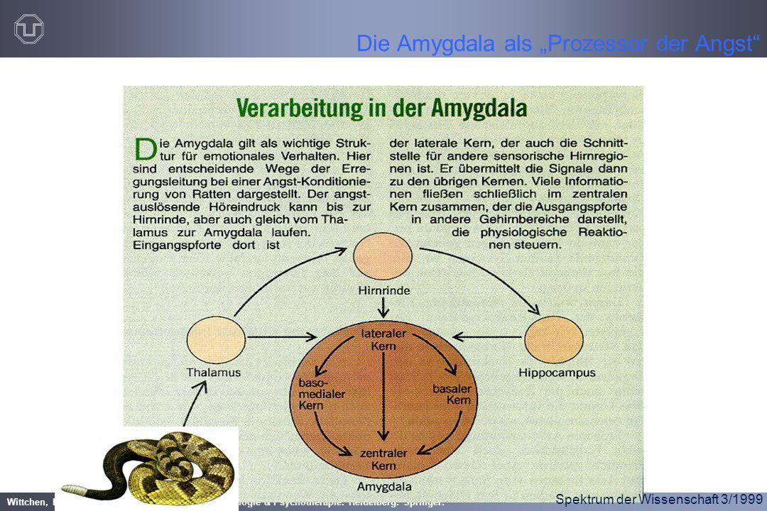 """Wittchen, H.-U. & Hoyer, J. (2006). Klinische Psychologie & Psychotherapie. Heidelberg: Springer. Die Amygdala als """"Prozessor der Angst"""" Spektrum der"""