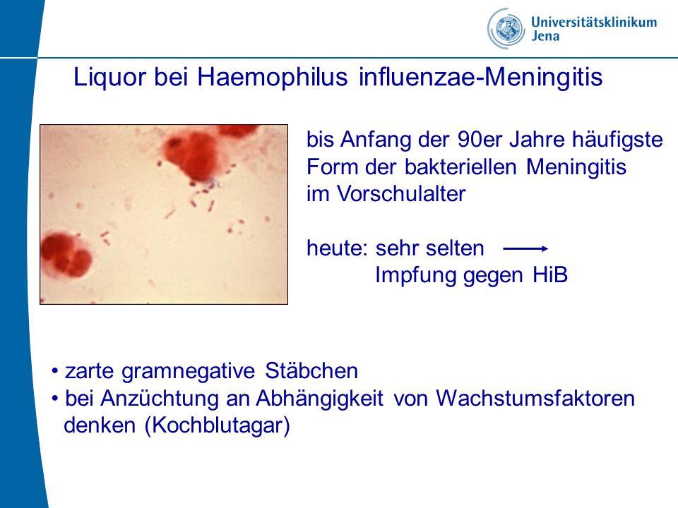 Liquor bei Haemophilus influenzae-Meningitis bis Anfang der 90er Jahre häufigste Form der bakteriellen Meningitis im Vorschulalter heute: sehr selten Impfung gegen HiB zarte gramnegative Stäbchen bei Anzüchtung an Abhängigkeit von Wachstumsfaktoren denken (Kochblutagar)