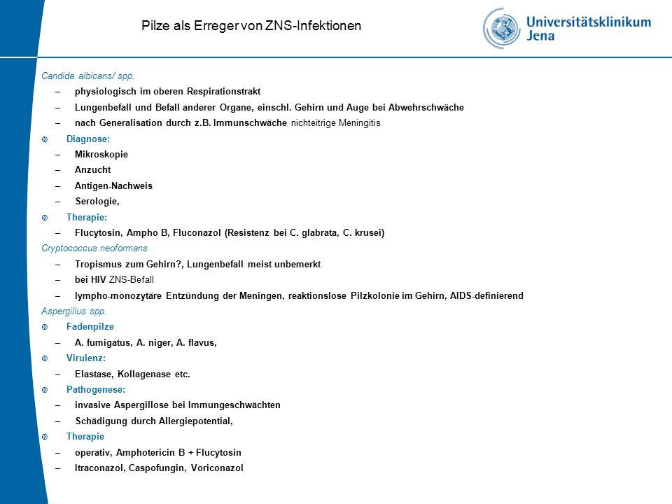 Pilze als Erreger von ZNS-Infektionen Candida albicans/ spp.