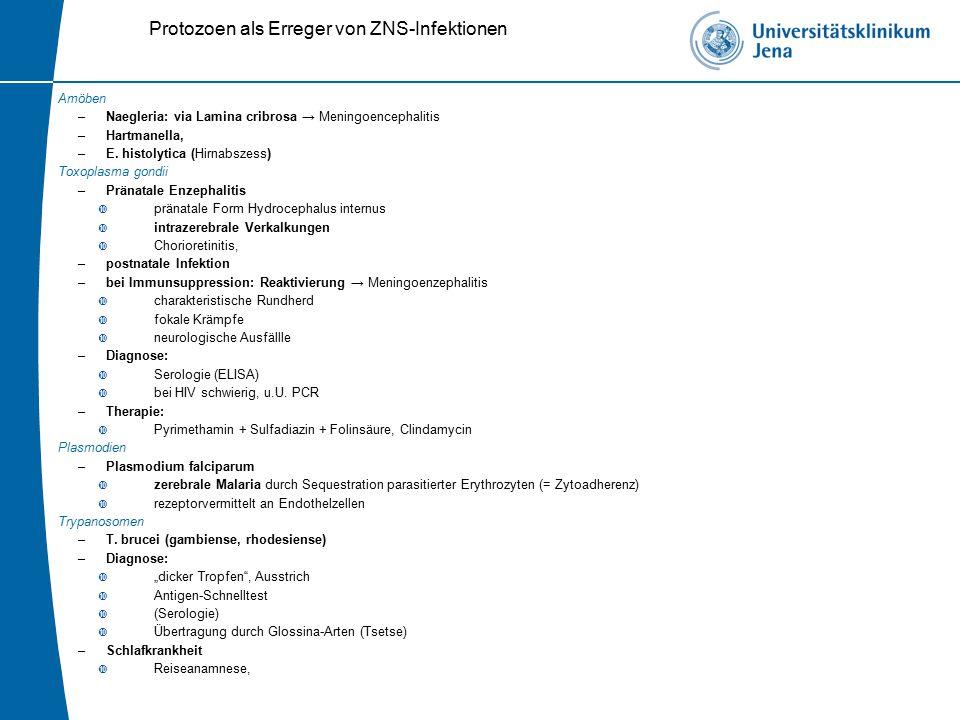 Protozoen als Erreger von ZNS-Infektionen Amöben –Naegleria: via Lamina cribrosa → Meningoencephalitis –Hartmanella, –E.