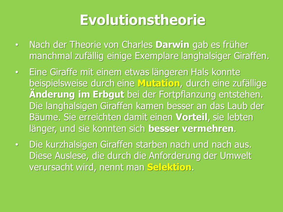 Evolutionstheorie Nach der Theorie von Charles Darwin gab es früher manchmal zufällig einige Exemplare langhalsiger Giraffen. Nach der Theorie von Cha