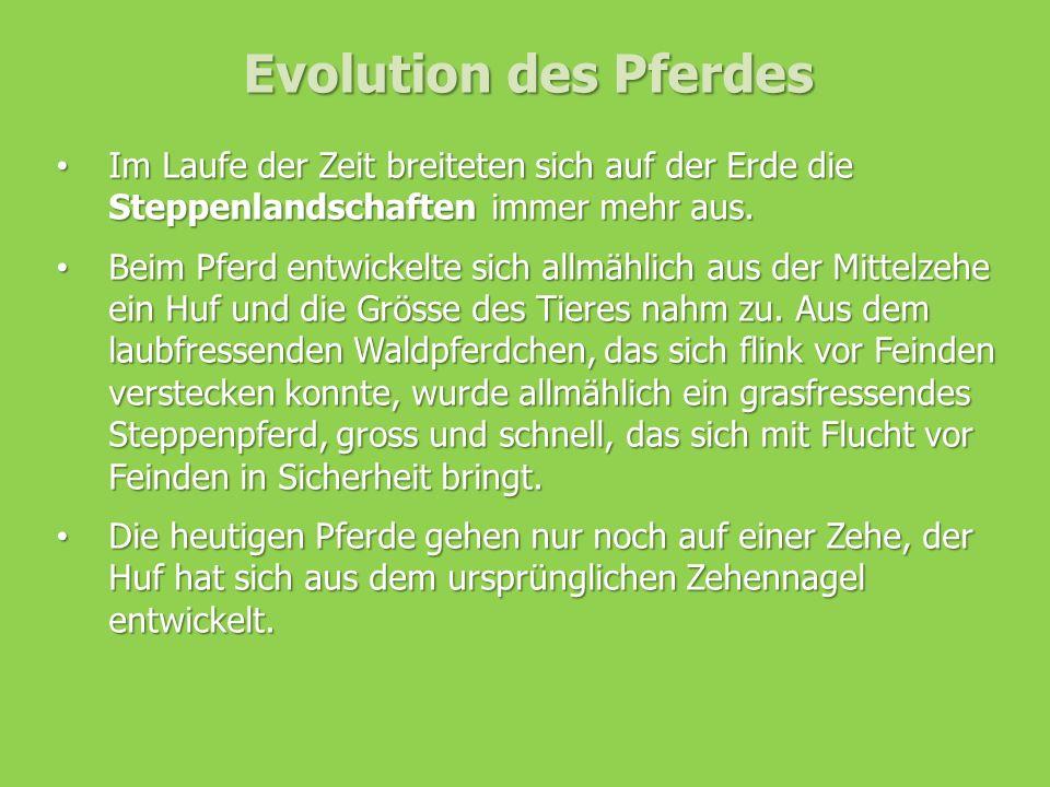 Evolution des Pferdes Im Laufe der Zeit breiteten sich auf der Erde die Steppenlandschaften immer mehr aus. Im Laufe der Zeit breiteten sich auf der E