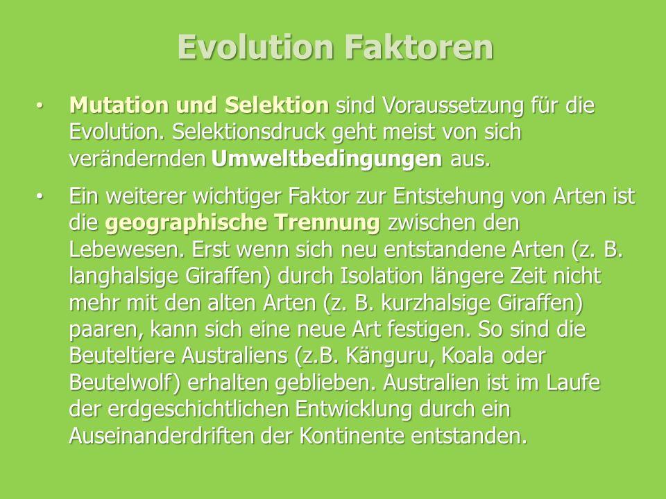 Evolution Faktoren Mutation und Selektion sind Voraussetzung für die Evolution. Selektionsdruck geht meist von sich verändernden Umweltbedingungen aus