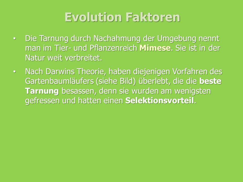 Evolution Faktoren Die Tarnung durch Nachahmung der Umgebung nennt man im Tier- und Pflanzenreich Mimese. Sie ist in der Natur weit verbreitet. Die Ta