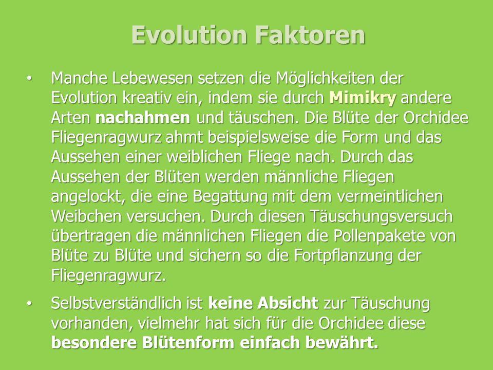 Evolution Faktoren Manche Lebewesen setzen die Möglichkeiten der Evolution kreativ ein, indem sie durch Mimikry andere Arten nachahmen und täuschen. D