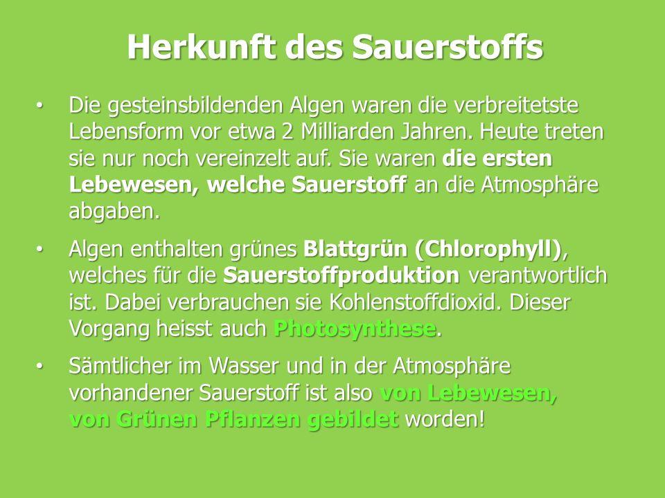 Herkunft des Sauerstoffs Die gesteinsbildenden Algen waren die verbreitetste Lebensform vor etwa 2 Milliarden Jahren. Heute treten sie nur noch verein