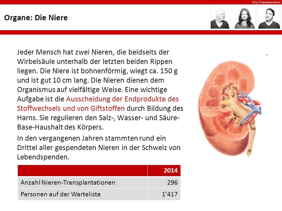 02a / Transplantation Organe: Die Niere Jeder Mensch hat zwei Nieren, die beidseits der Wirbelsäule unterhalb der letzten beiden Rippen liegen. Die Ni