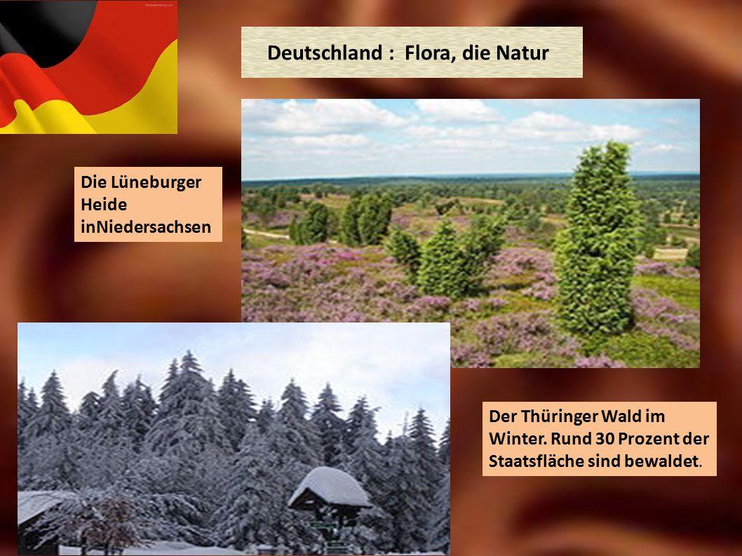 Deutschland : Flora, die Natur Die Lüneburger Heide inNiedersachsen Der Thüringer Wald im Winter. Rund 30 Prozent der Staatsfläche sind bewaldet.