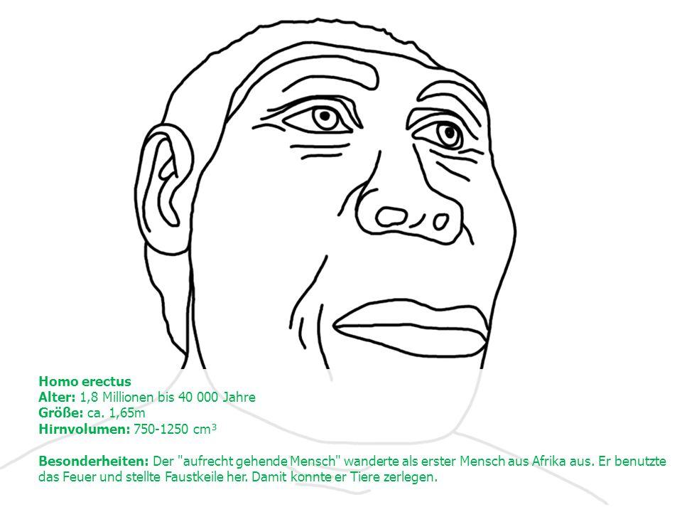 Homo erectus Alter: 1,8 Millionen bis 40 000 Jahre Größe: ca.