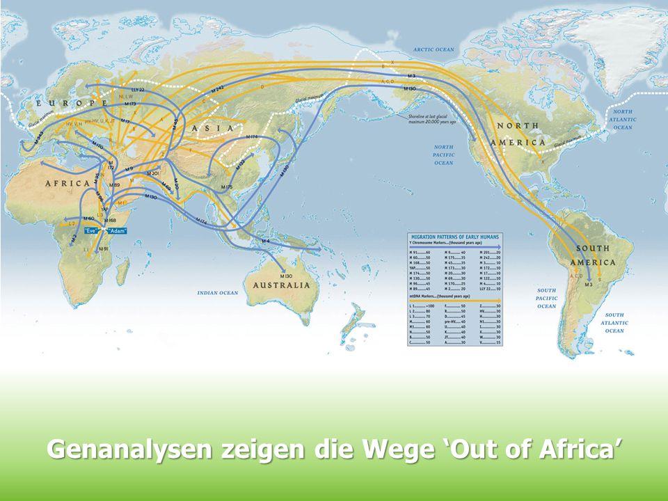 Genanalysen zeigen die Wege 'Out of Africa'