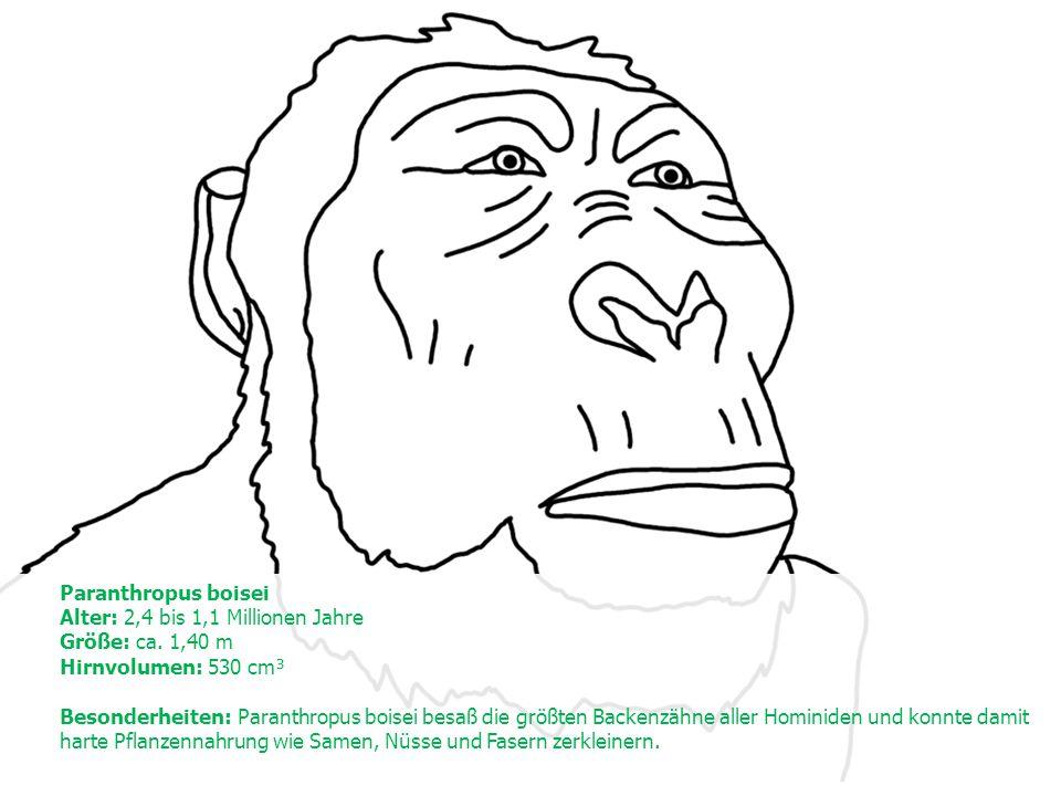 Paranthropus boisei Alter: 2,4 bis 1,1 Millionen Jahre Größe: ca.