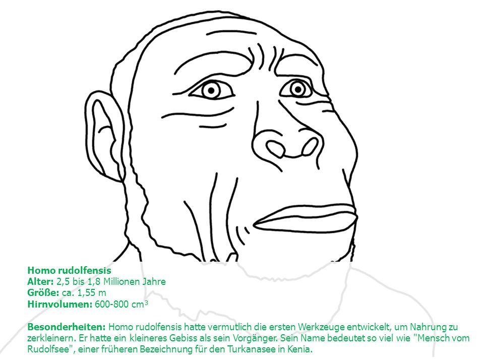 Homo rudolfensis Alter: 2,5 bis 1,8 Millionen Jahre Größe: ca.