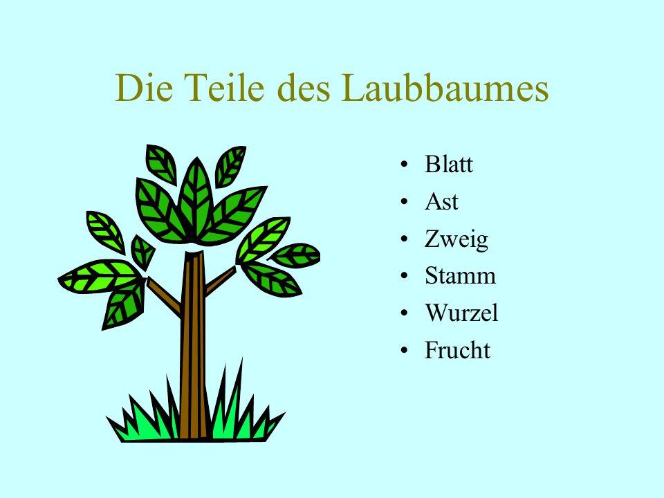 Die Teile des Laubbaumes Blatt Ast Zweig Stamm Wurzel Frucht