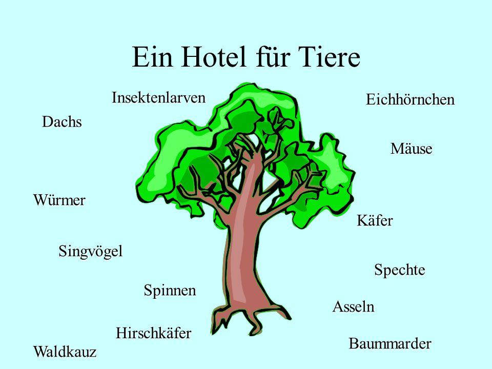 Ein Hotel für Tiere Mäuse Eichhörnchen Käfer Spechte Asseln Baummarder Waldkauz Hirschkäfer Spinnen Würmer Dachs Insektenlarven Singvögel