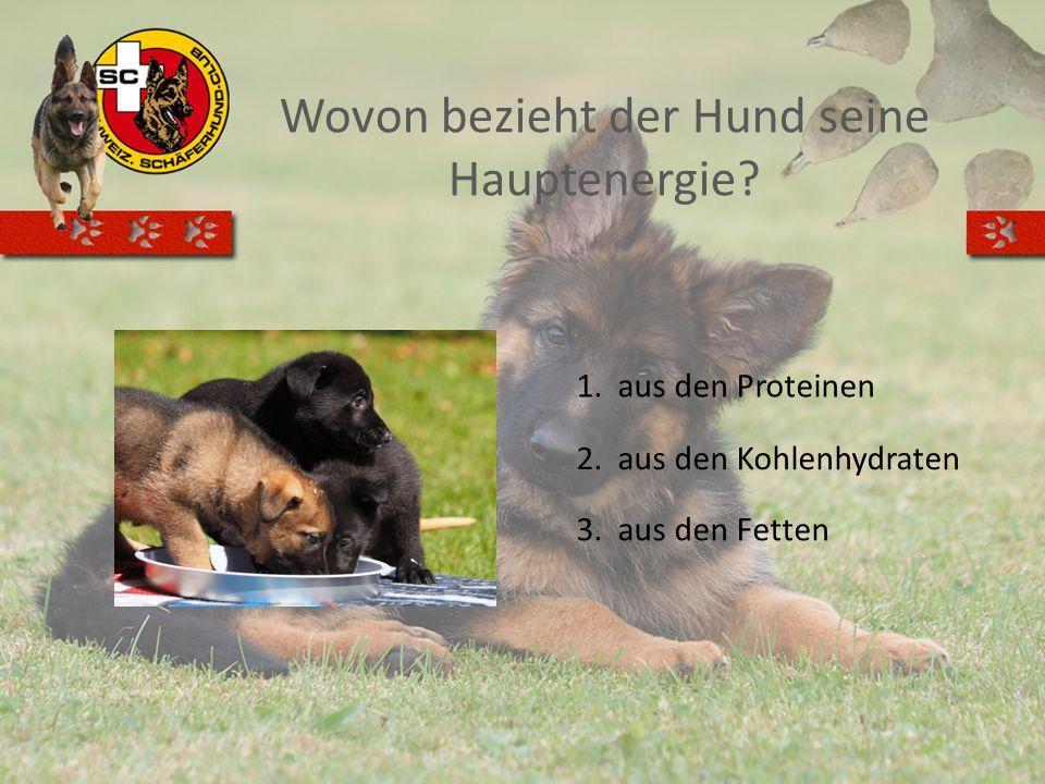 Wovon bezieht der Hund seine Hauptenergie? 1.aus den Proteinen 2.aus den Kohlenhydraten 3.aus den Fetten