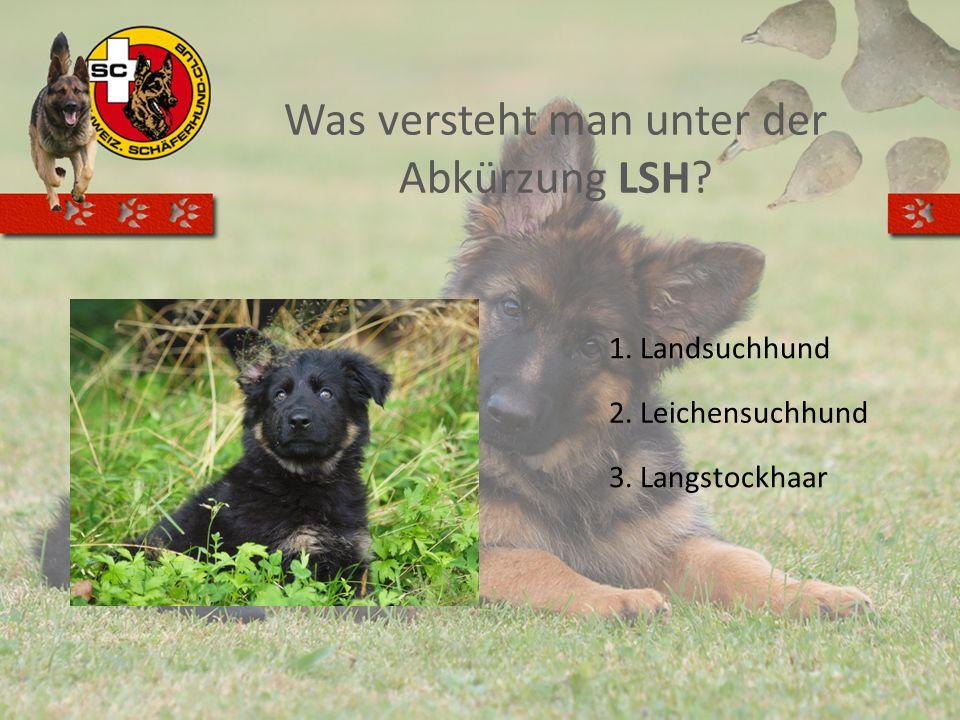 Was versteht man unter der Abkürzung LSH? 1. Landsuchhund 2. Leichensuchhund 3. Langstockhaar