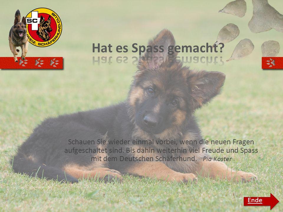 Schauen Sie wieder einmal vorbei, wenn die neuen Fragen aufgeschaltet sind. Bis dahin weiterhin viel Freude und Spass mit dem Deutschen Schäferhund. P