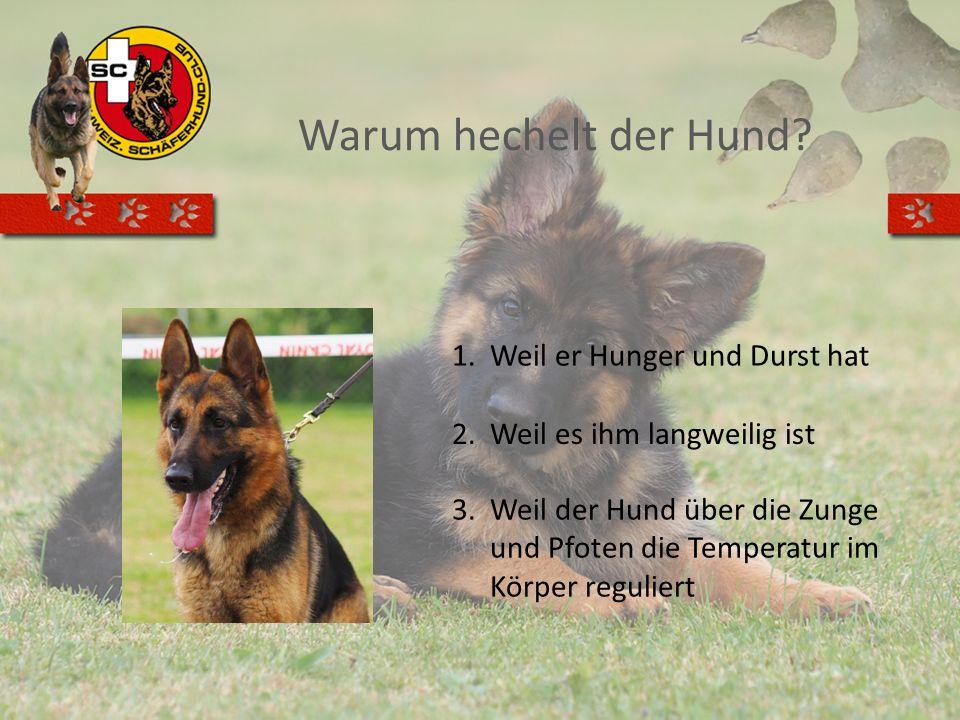 Warum hechelt der Hund? 1.Weil er Hunger und Durst hat 2.Weil es ihm langweilig ist 3.Weil der Hund über die Zunge und Pfoten die Temperatur im Körper