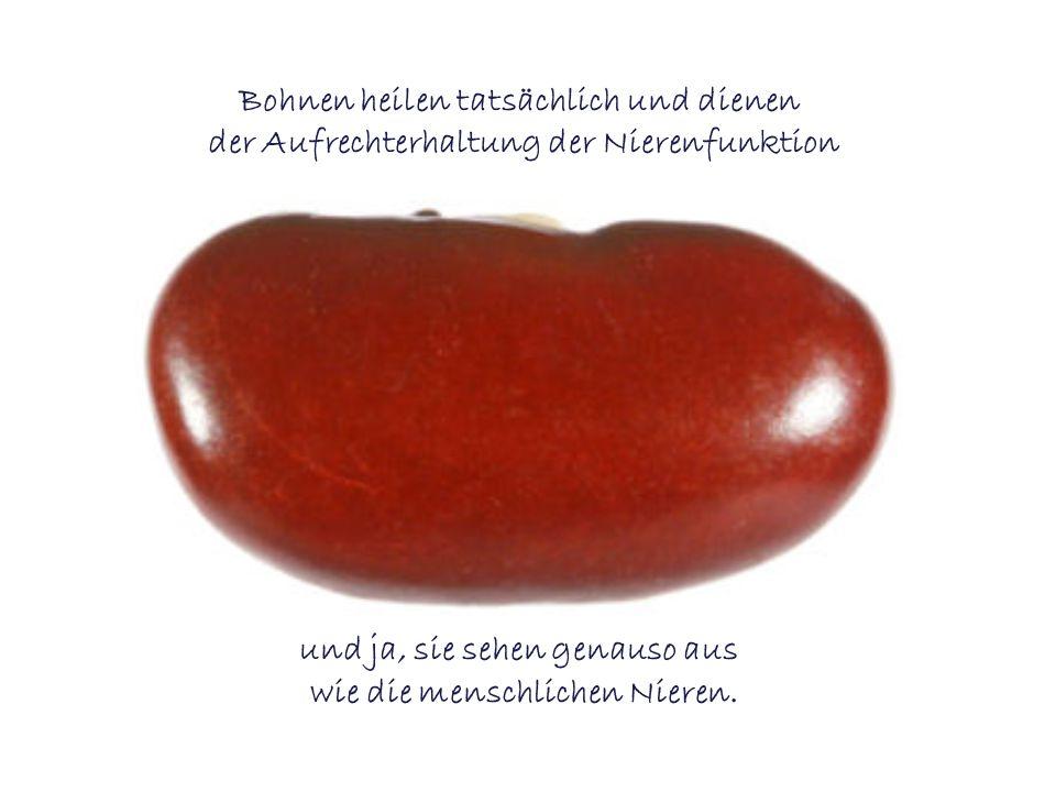 Bohnen heilen tatsächlich und dienen der Aufrechterhaltung der Nierenfunktion und ja, sie sehen genauso aus wie die menschlichen Nieren.