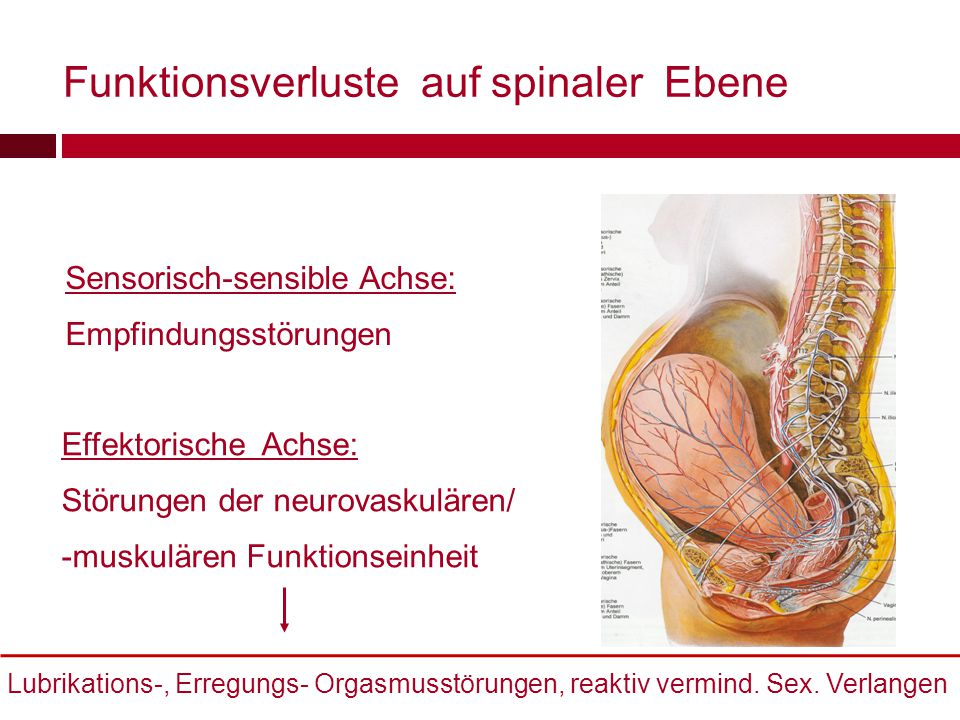 Funktionsverluste auf spinaler Ebene Frau/Mann Sensorisch-sensible Achse: Empfindungsstörungen Lubrikations-, Erregungs- Orgasmusstörungen, reaktiv ve