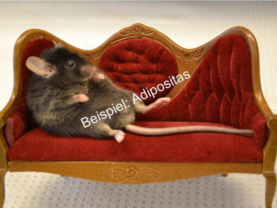 Beispiel: Adipositas