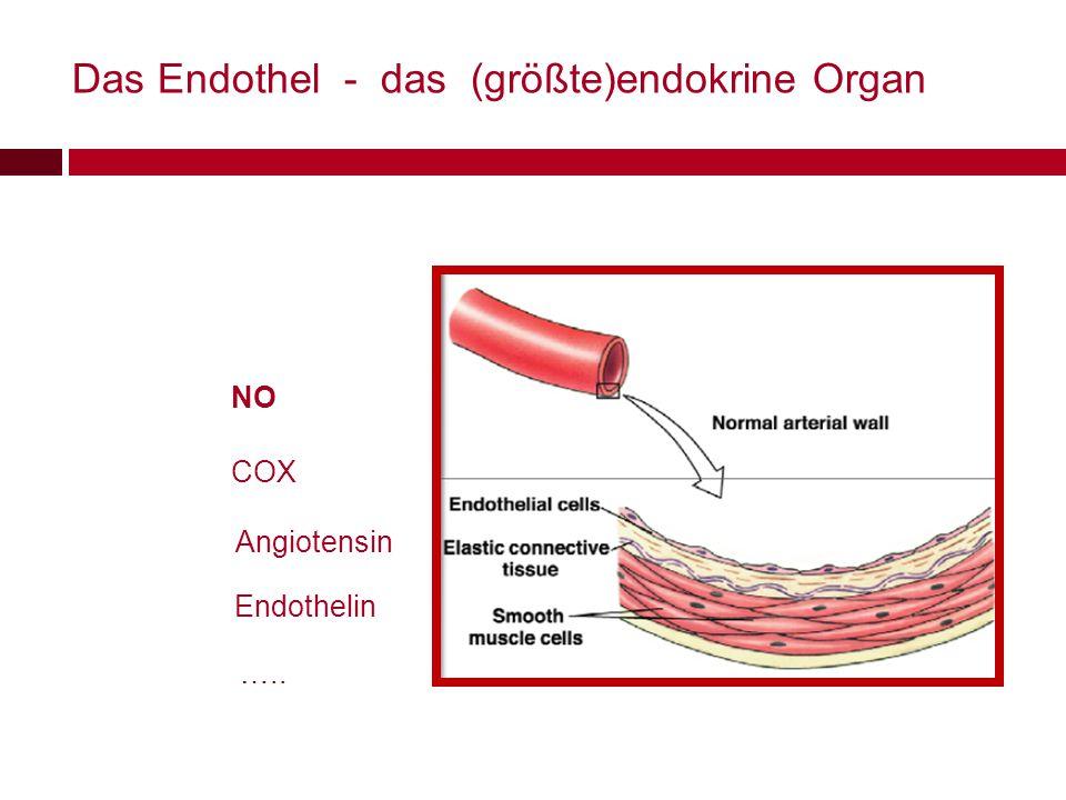 Das Endothel - das (größte)endokrine Organ NO COX Angiotensin Endothelin …..