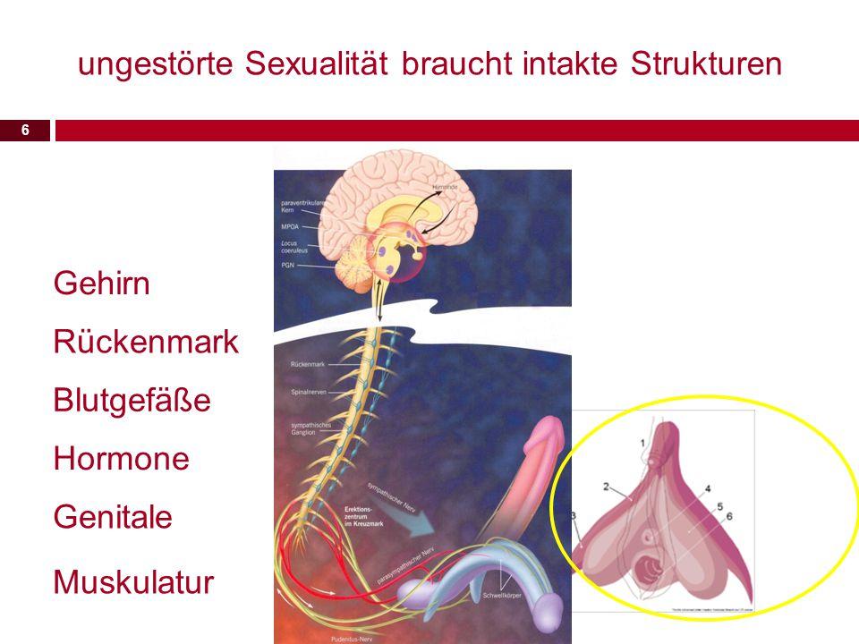 6 ungestörte Sexualität braucht intakte Strukturen Gehirn Rückenmark Hormone Blutgefäße Genitale Muskulatur
