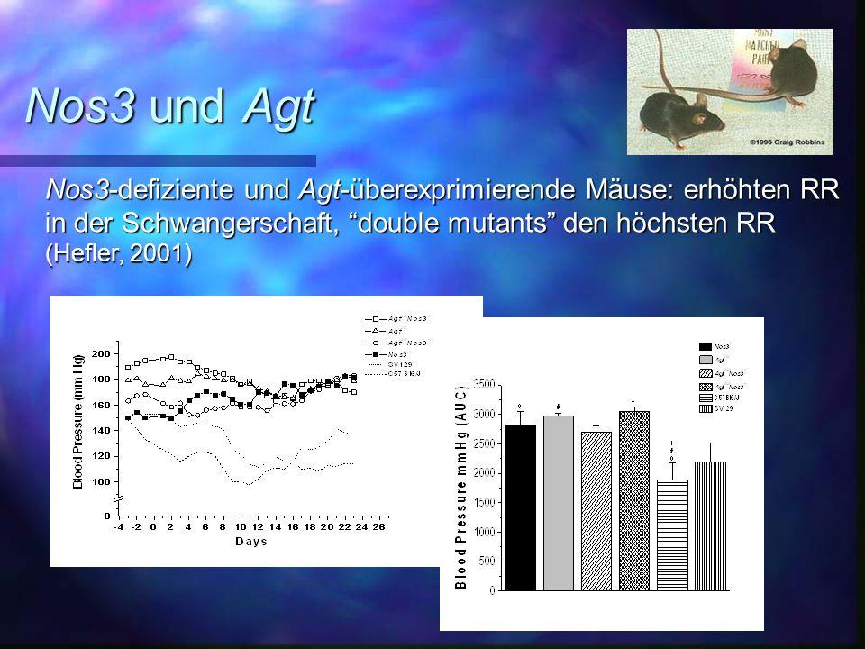 Nos3 und Agt Nos3-defiziente und Agt-überexprimierende Mäuse: erhöhten RR in der Schwangerschaft, double mutants den höchsten RR (Hefler, 2001)
