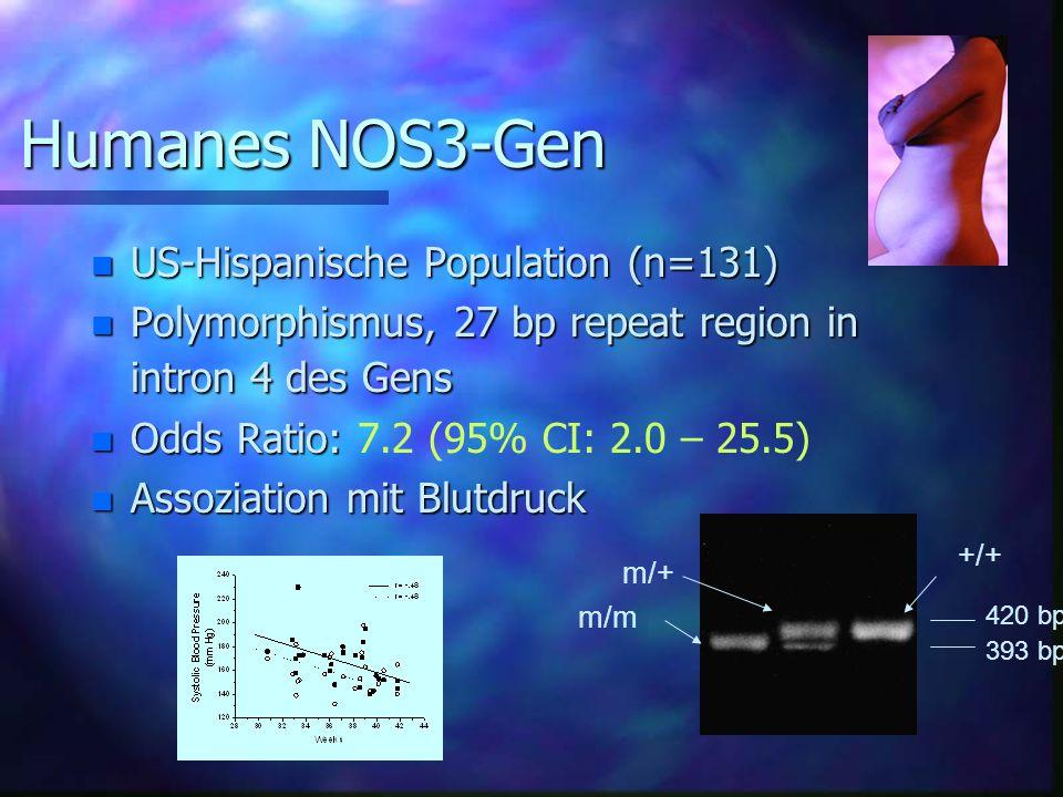 Humanes NOS3-Gen n US-Hispanische Population (n=131) n Polymorphismus, 27 bp repeat region in intron 4 des Gens n Odds Ratio: n Odds Ratio: 7.2 (95% CI: 2.0 – 25.5) n Assoziation mit Blutdruck 393 bp 420 bp m/m +/+ m/+