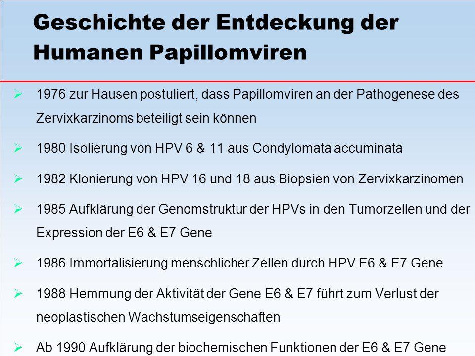 Geschichte der Entdeckung der Humanen Papillomviren  1976 zur Hausen postuliert, dass Papillomviren an der Pathogenese des Zervixkarzinoms beteiligt