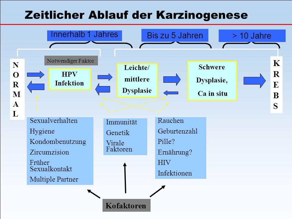 Zeitlicher Ablauf der Karzinogenese NORMALNORMAL HPV Infektion Leichte/ mittlere Dysplasie Schwere Dysplasie, Ca in situ KREBSKREBS Notwendiger Faktor