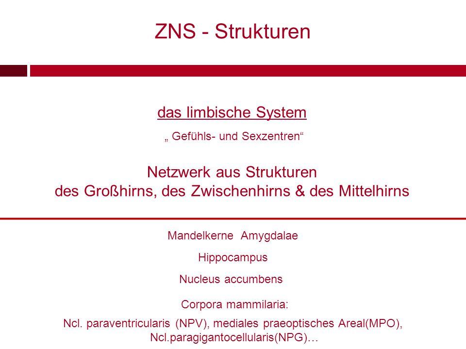 """das limbische System """" Gefühls- und Sexzentren"""" Netzwerk aus Strukturen des Großhirns, des Zwischenhirns & des Mittelhirns Mandelkerne Amygdalae Hippo"""