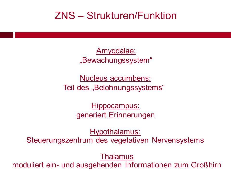 """Amygdalae: """"Bewachungssystem"""" Hippocampus: generiert Erinnerungen Nucleus accumbens: Teil des """"Belohnungssystems"""" ZNS – Strukturen/Funktion Hypothalam"""