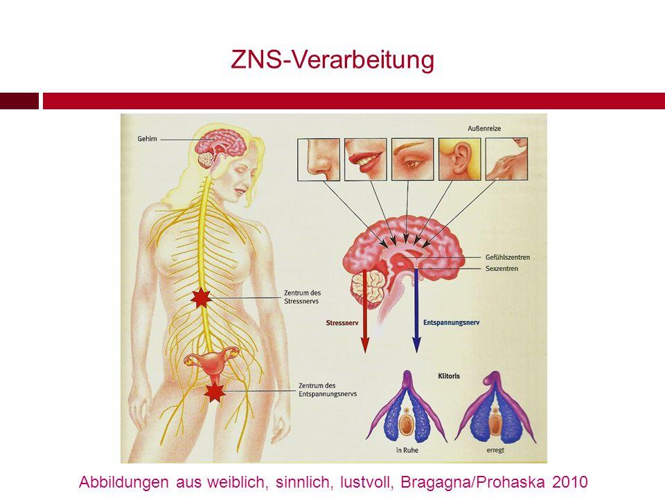 ZNS-Verarbeitung Abbildungen aus weiblich, sinnlich, lustvoll, Bragagna/Prohaska 2010