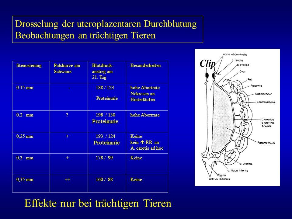 Drosselung der uteroplazentaren Durchblutung Beobachtungen an trächtigen Tieren StenosierungPulskurve am Schwanz Blutdruck- anstieg am 21. Tag Besonde