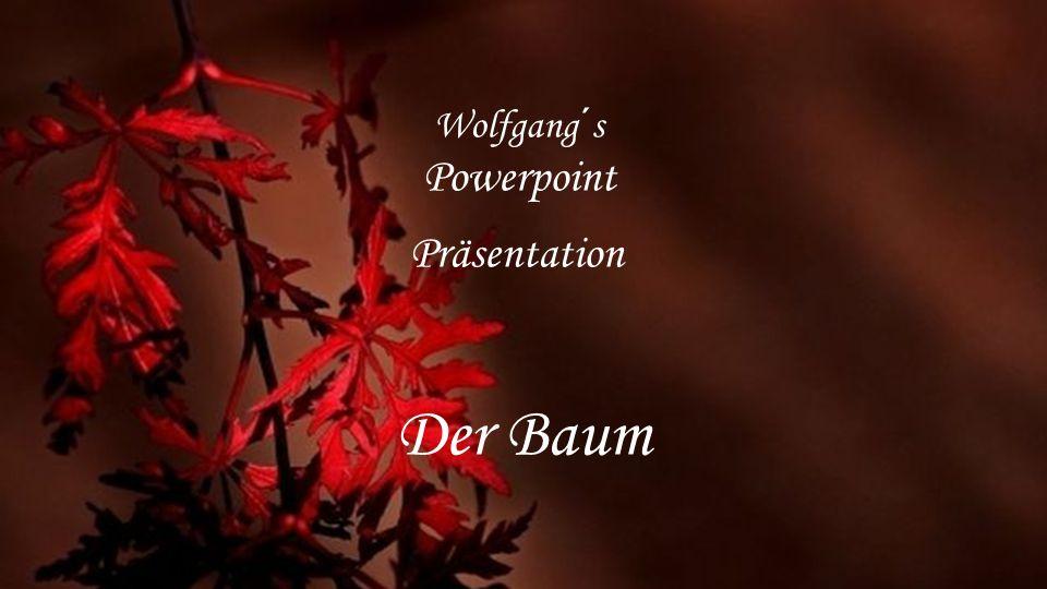 Der Baum Wolfgang´s Powerpoint Präsentation